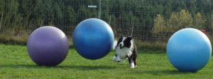 Treibball @ Trainingshalle Hunde Naturell