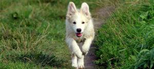 "Workshop Notfall ""Pfeife"" @ Trainingsgelände Hunde Naturell"