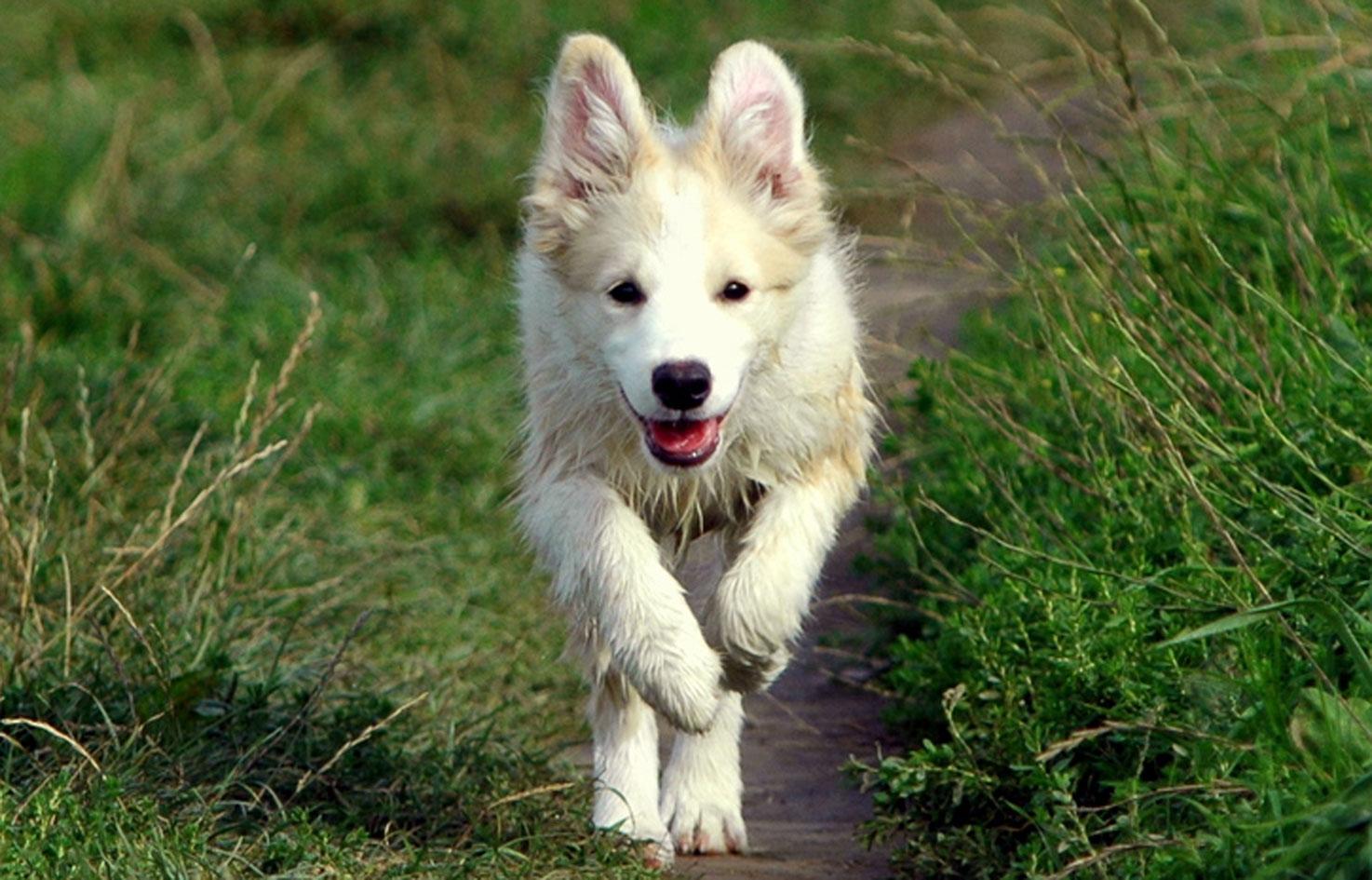 Hundeernährung Gesundheit